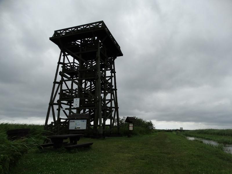 Dzień II - Wieża widokowa na Jezioro Łebsko