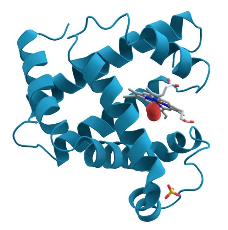 Cząsteczki białka (źródło: wikimedia.org)