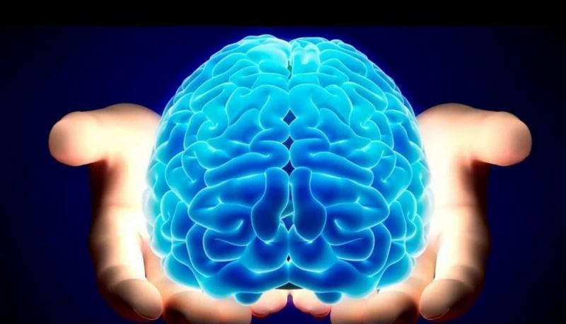 Mózg (źródło: pinterest.com)