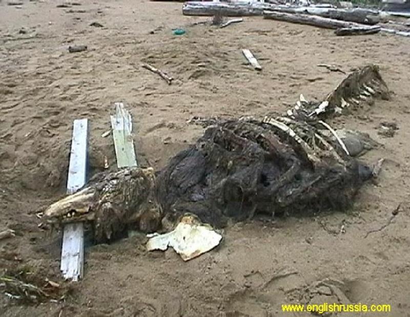 Potwór z Sachalinu