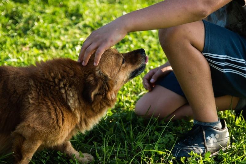 Pies i chłopiec (źródło: pixnio.com)