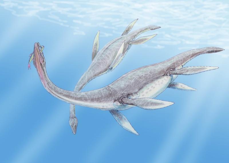Długoszyjne plezjozaury (źródło: wikimedia.rog)