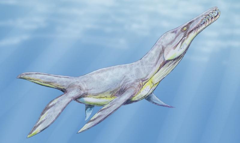 Pliozaur - grafika (źródło: wikimedia.org)