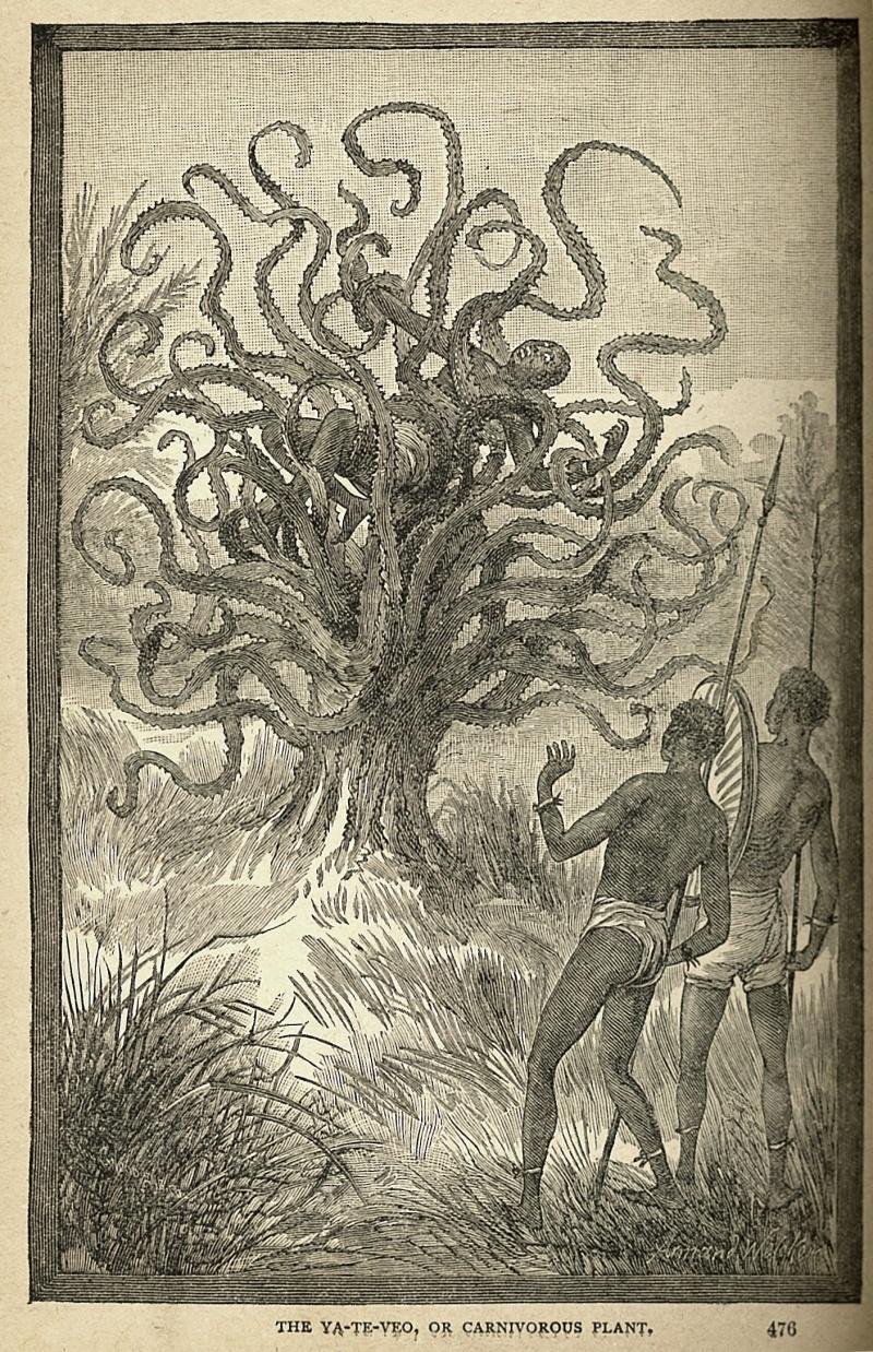 Mięsożerne drzewo znalezione w Afryce (źródło: wikimedia.org)