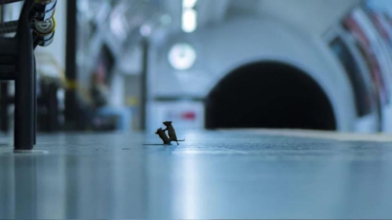 """""""Sprzeczka na stacji"""", Sam Rowley (youtube.com/screenshot)"""
