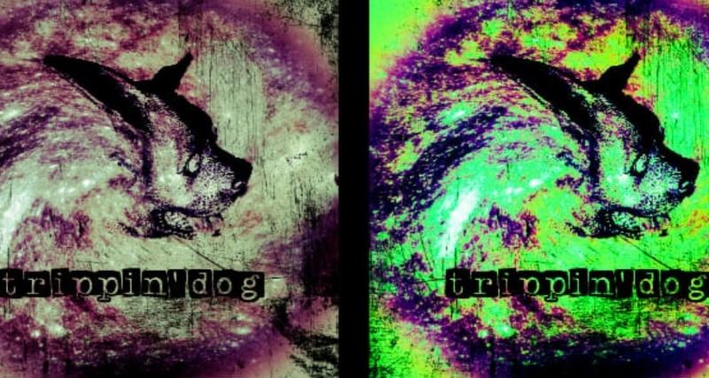 """Okładka EPki """"Trippindog"""" (źródło: archiwum prywatne zespołu)"""