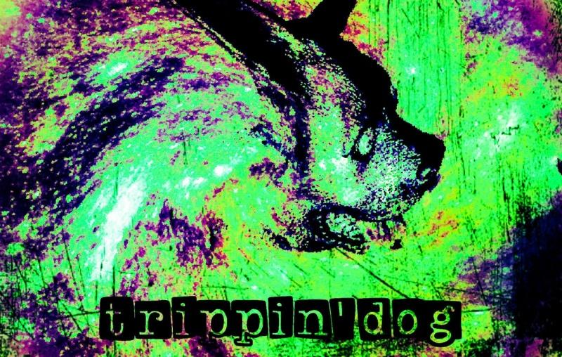 """Okładka EPki """"Trippindog"""" (źródło: trippingdog.bandcamp.com/releases)"""