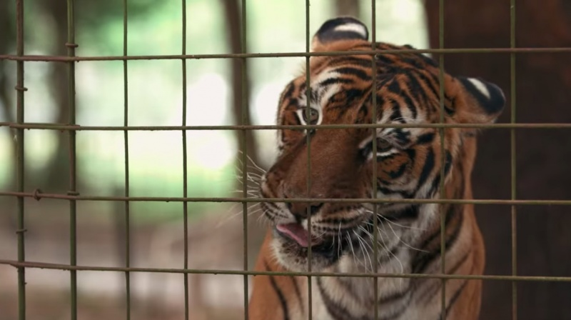 """Kadr z serialu """"Król tygrysów"""" (źródło: Netflix)"""