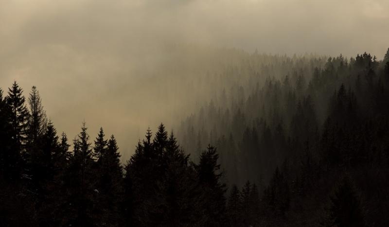 Mroczny las (zdjęcie ilustracyjne/libreshot.com)