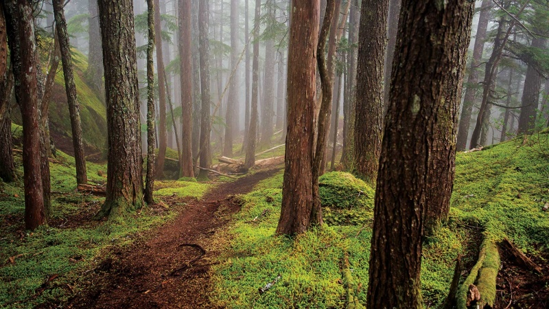 Dziwny las (źródło: www.bikemag.com)