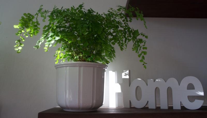 Zdjęcie ilustracyjne (źródło: pxhere.com)