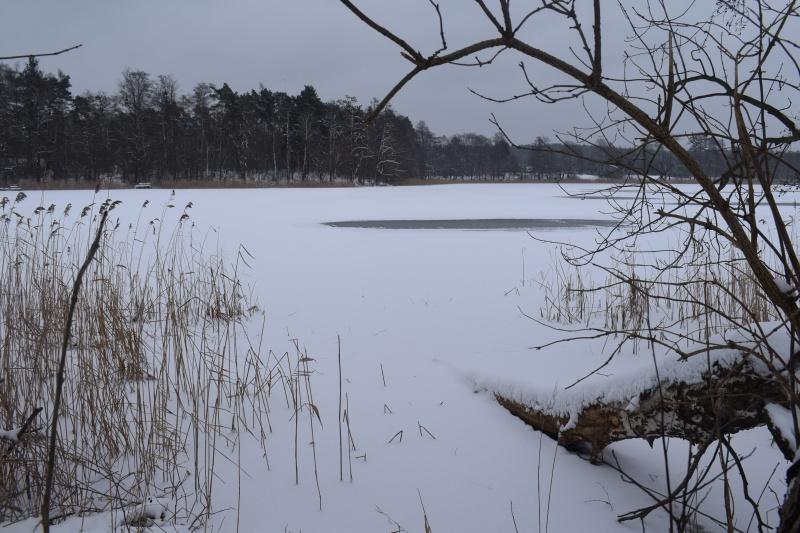 Pani Zima na Kujawach - jezioro Czarne (fot. PJ)