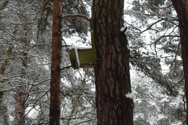 Pani Zima na Kujawach - zaczarowany las (fot. PJ)