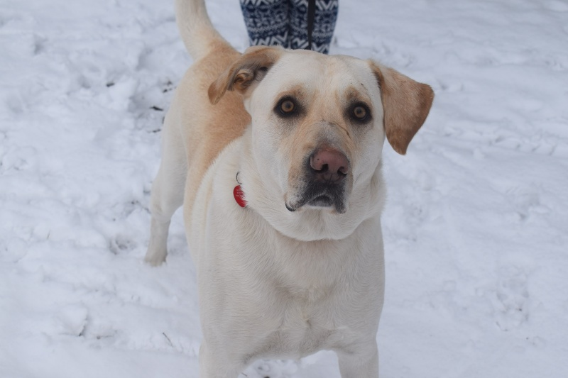Pani Zima na Kujawach - pies pozował do zdjęcia (fot. PJ)