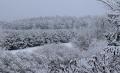 Piękna Pani Zima na Kujawach  - Pani Zima;Kujawy;Czarne;wieś;bajka;zjawiskowa;zima;zaczarowany las;fotografie;zdjęcia;spacer;biały puch;rzadkość;nowa nadzieja;2021;7 stycznia;czwartek;16 stycznia;jezioro Czarne;pan Bałwanek