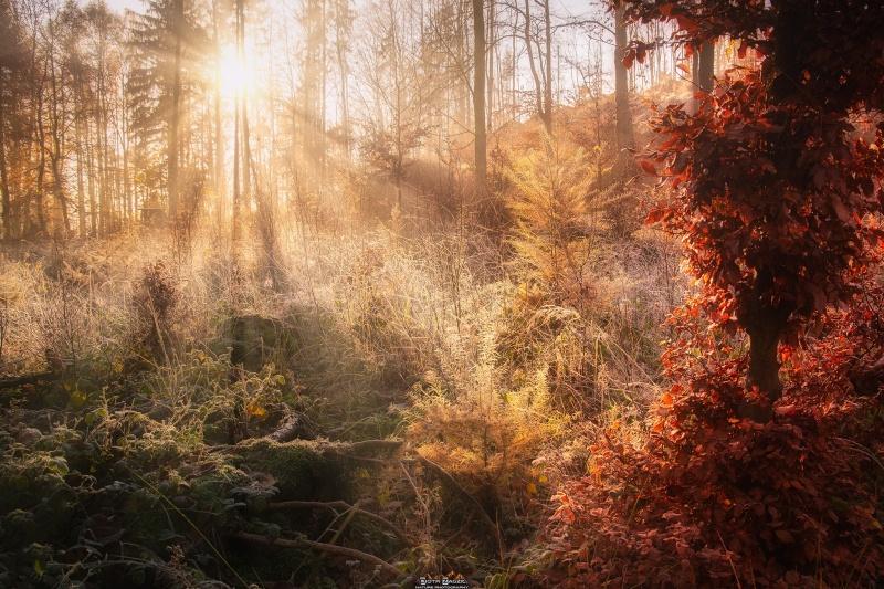 Poranek w lesie w Kudowie-Zdroju (fot. PZ)