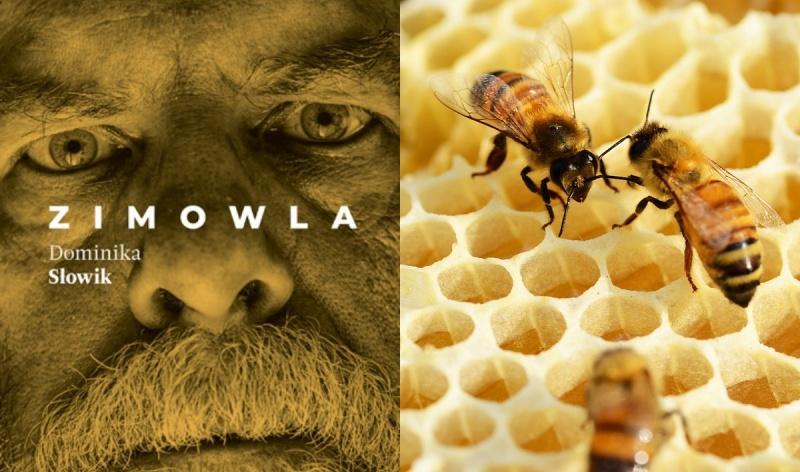 Okładka (źródło: www.znak.com.pl); Pszczoły i miód (źródło: pixabay.com)