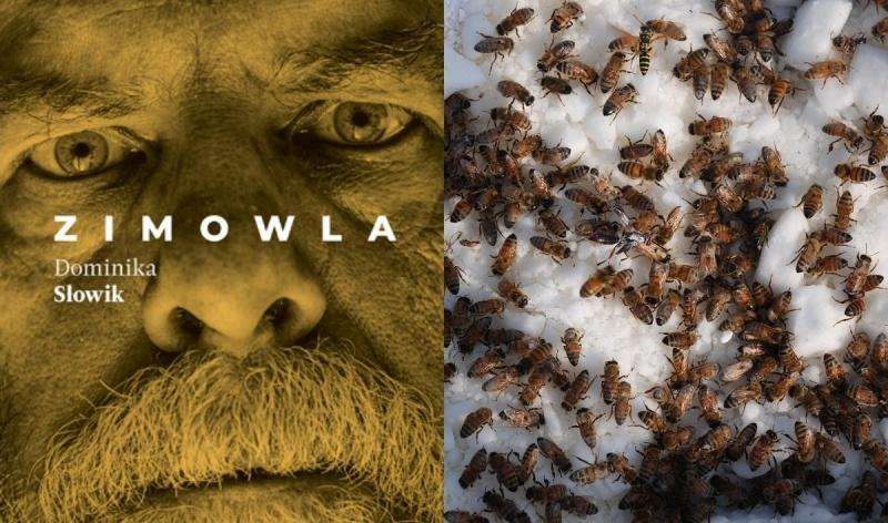Okładka (źródło: www.znak.com.pl); Pszczoły na śniegu (źródło: wikimedia.org)