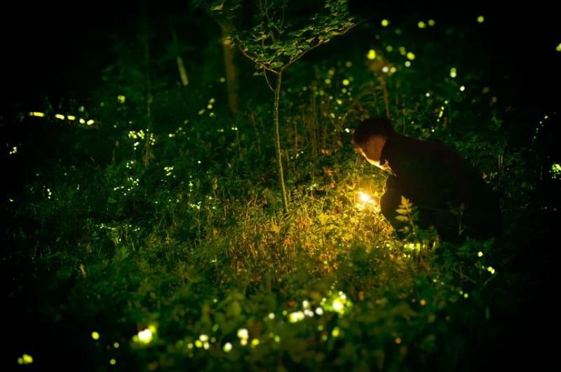 Świecąca trawa (źródło: didyouknowscience.com)