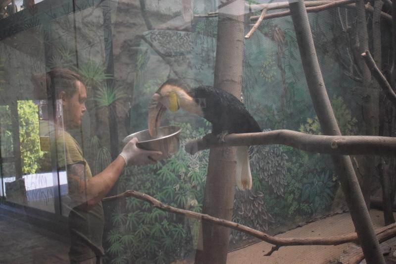 Zoo w Płocku - smacznego (fot. PJ)