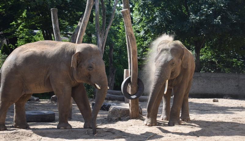 Zoo w Płocku - słonie w swoim żywiole (fot. PJ)