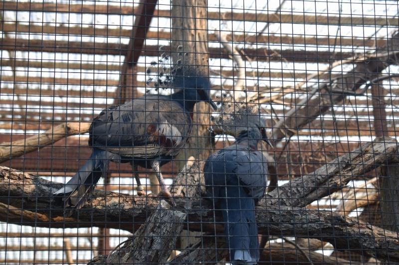 Zoo w Płocku (fot. PJ)