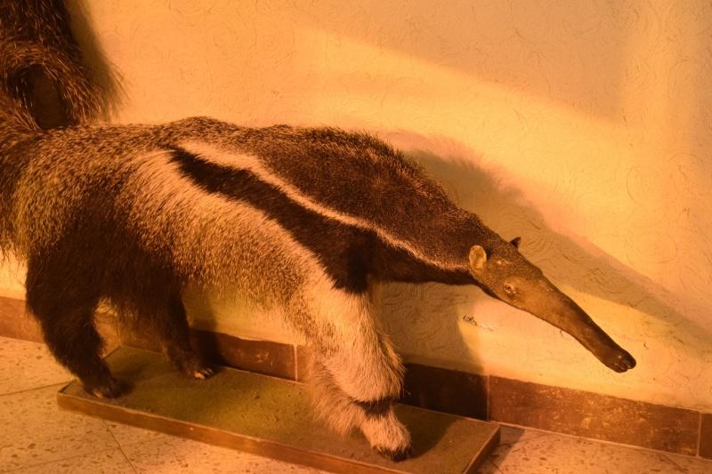 Zoo w Płocku - a to nieprawdziwy mrówkojad (fot. PJ)
