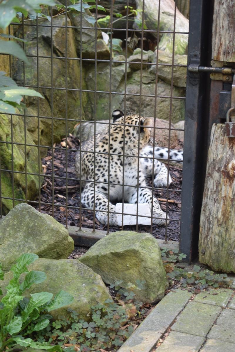 Zoo w Płocku - kotek nie chciał pozować (fot. PJ)