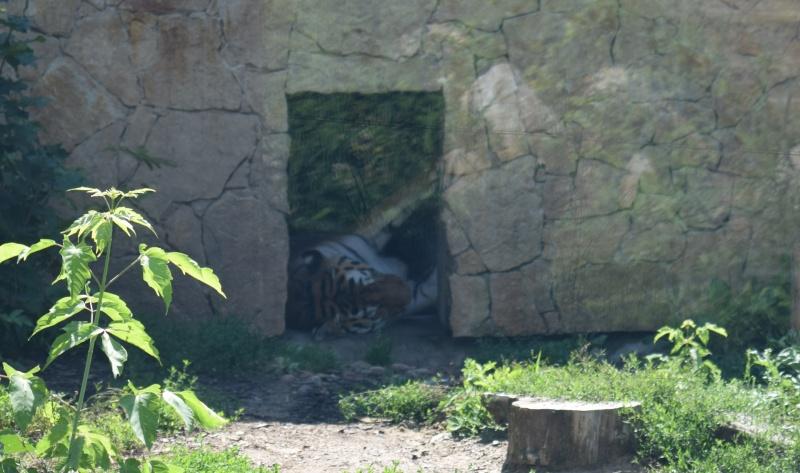 Zoo w Płocku - ten kotek też nie był zainteresowany pozowaniem (fot. PJ)