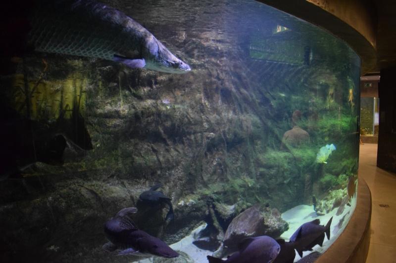 Zoo w Płocku - niesamowite akwarium (fot. PJ)