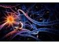 Sekrety ludzkiego mózgu - mózg;tajemnica;komórki;neurony