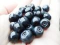 Dobroczynne źródło witamin - jagody - jagody;witaminy;dobroczynne;źródło;biegunka;rak;jak nie zachorować na raka;kwas foliowy;co na przeziębienie;czarne jagody