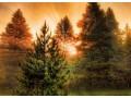 Matki Boskiej Zielnej – ludowy odpowiednik katolickiego święta - Matka Boża Zielna;święto;Wniebowzięcie;tradycja ludowa;Maryja Panna