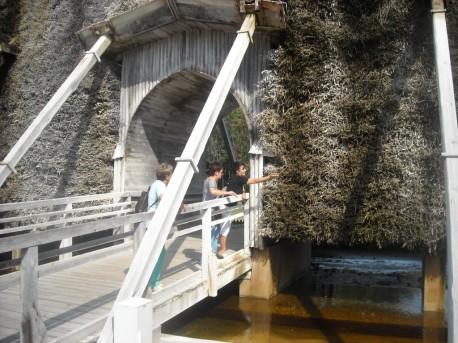 Solanka swobodnie spływa po gałązkach tarniny
