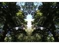 """Wendigo"" – Pakt z leśnym demonem -"