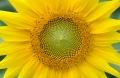 Tajemnice przyrody i matematyki - Ciąg Fibonacciego i liczba Fi -