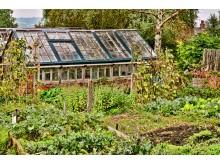 Ciekawe porady ogrodnicze - ogród;walka;porady;wskazówki;dbanie;ogródek;ściółka