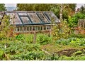 Ciekawe porady ogrodnicze -