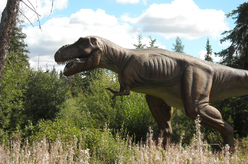 Tyranozaur (fot. PJ)