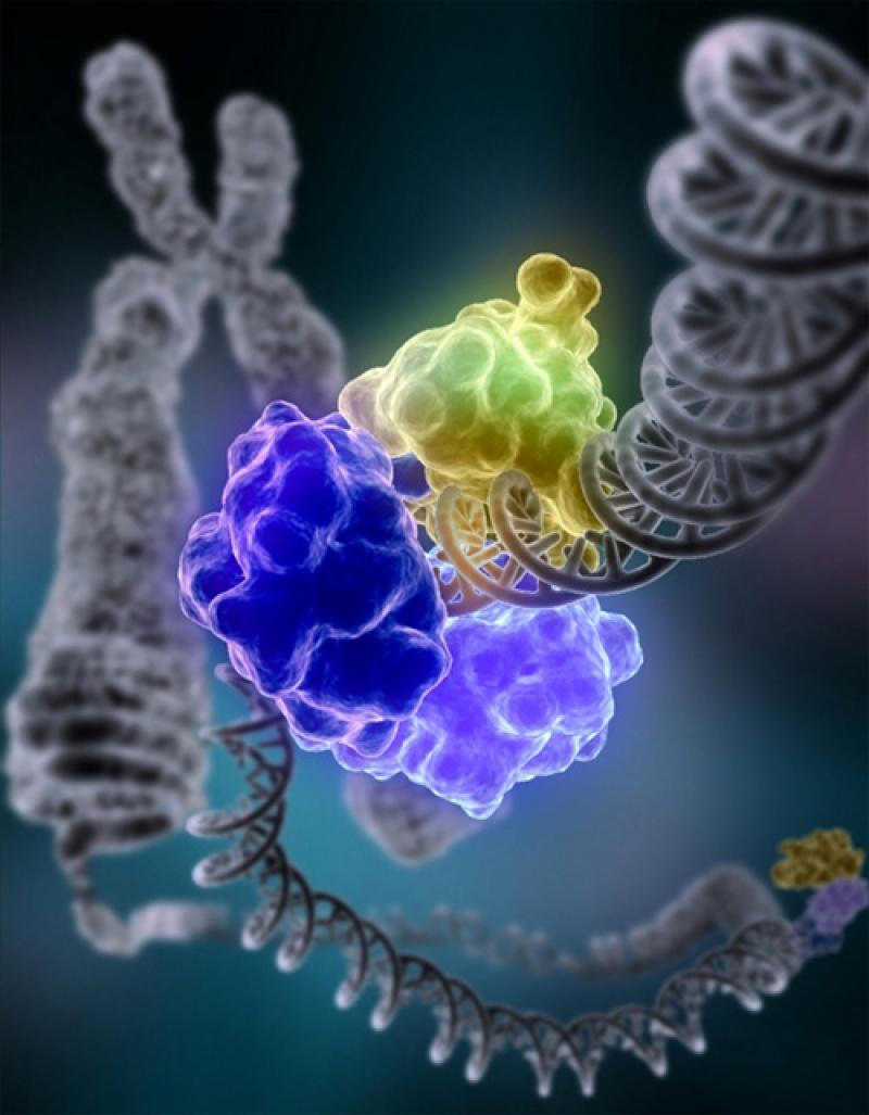 Naprawa DNA (źródło: wikimedia.org)