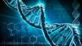 Czym jest DNA? - DNA;kontrola;kwas deoksyrybonukleinowy;nośnik informacji;zasady azotowe;genetyka;kod