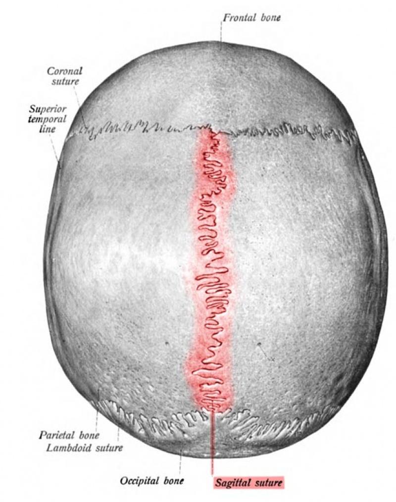 Szew czaszkowy czaszki z Paracas