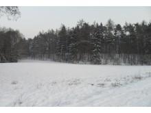 Piękno i urok zimy - zima;las;jeziora;łąki;śnieg;2013