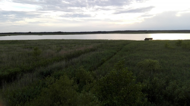 Dzień III - widok z wieży widokowej na jezioro Świdwie