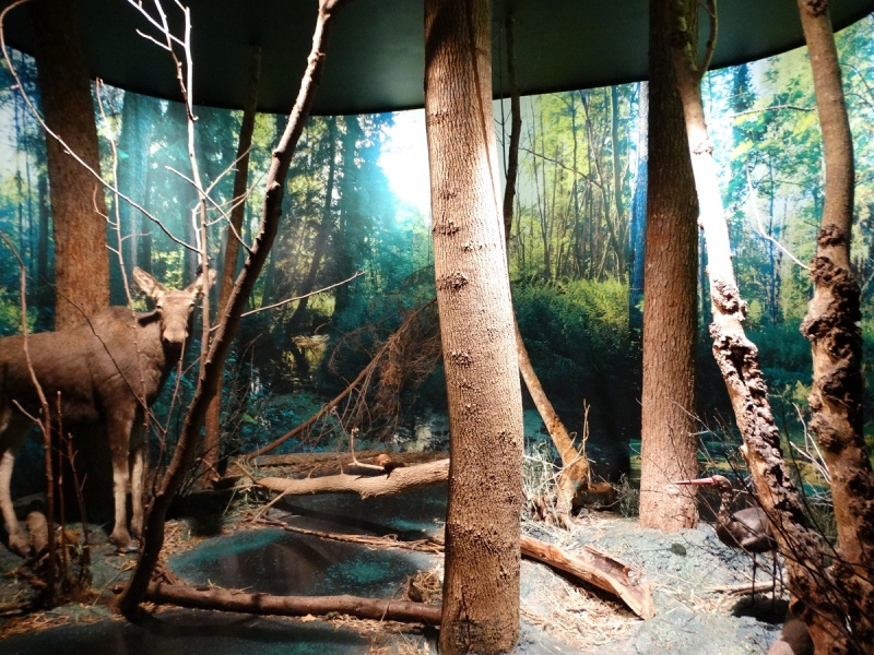 Dzień XII - Muzeum Przyrodniczo-Leśne Białowieskiego Parku Narodowego