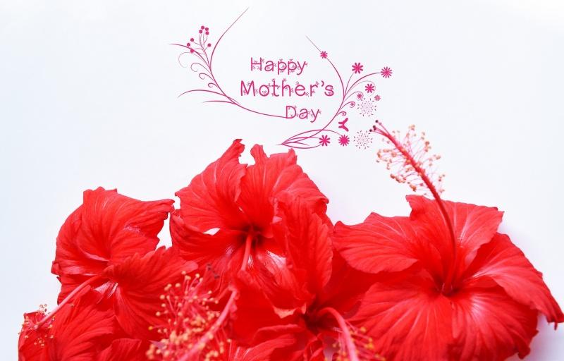 Kwiaty na Dzień Matki (źródło: pxhere.com)
