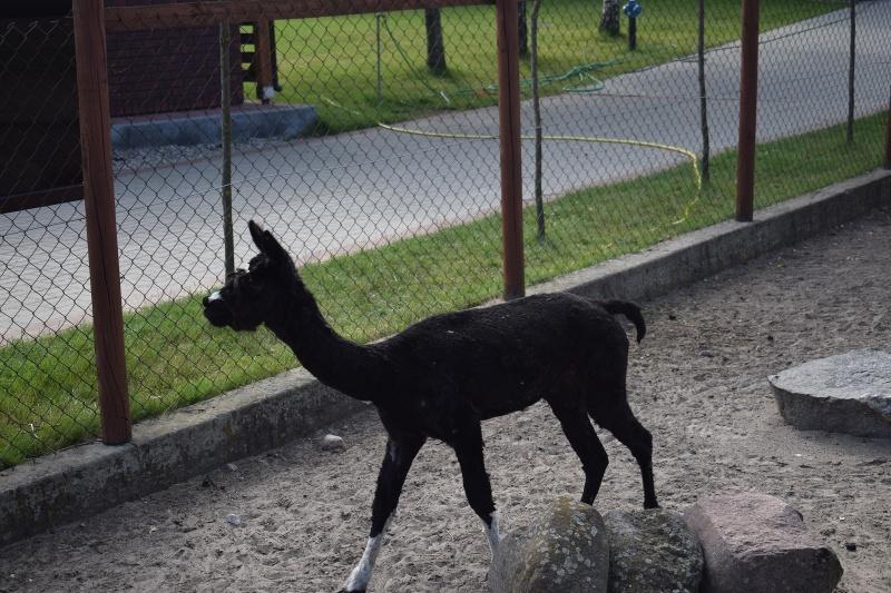 Mini Zoo w Goreniu Dużym (fot. PJ)